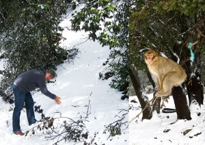 Monkey + snow = Once In a Lifetime Opportunity