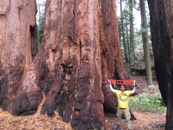 Giant Sequoias are more powerful (and taller) than chemo!